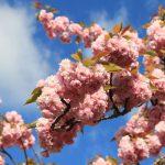 Blossom-