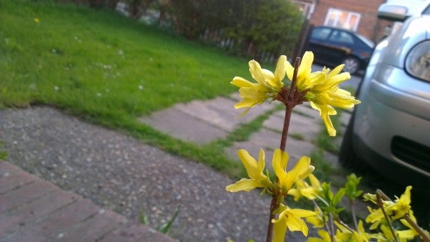 HTC One X Camera - Outdoor Flower Closeup