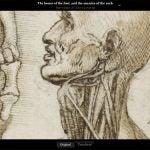 Leonardo da Vinci: Anatomy 1