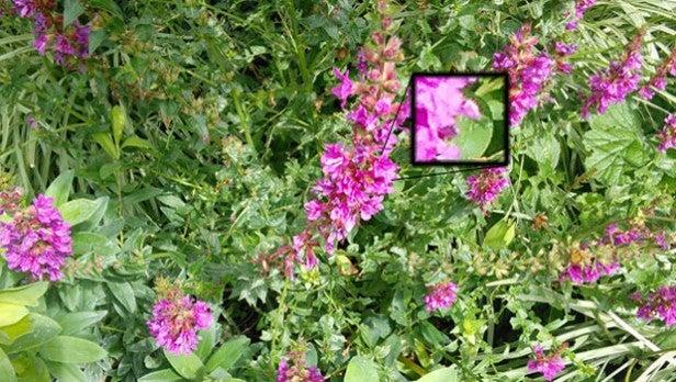 nexus 7 vs Tesco Hudl photo samples 1