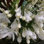 Asus ZenPad 8.0 test shot flowers