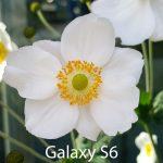 iPhone 6S camera photos 17
