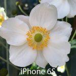 iPhone 6S camera photos 15
