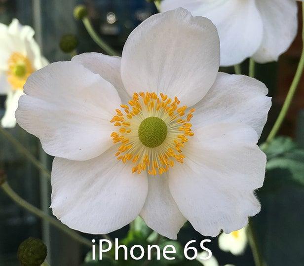 iPhone 6S фото с камеры 15