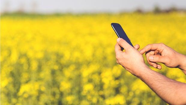 phone field