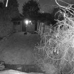 Nest Cam Outdoor 13