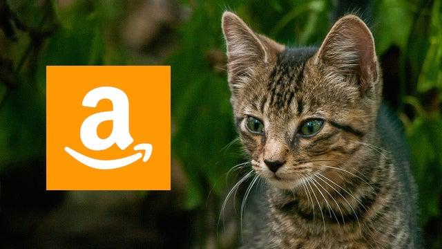 Cat Amazon