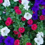 Flowers sample image Leica TL2