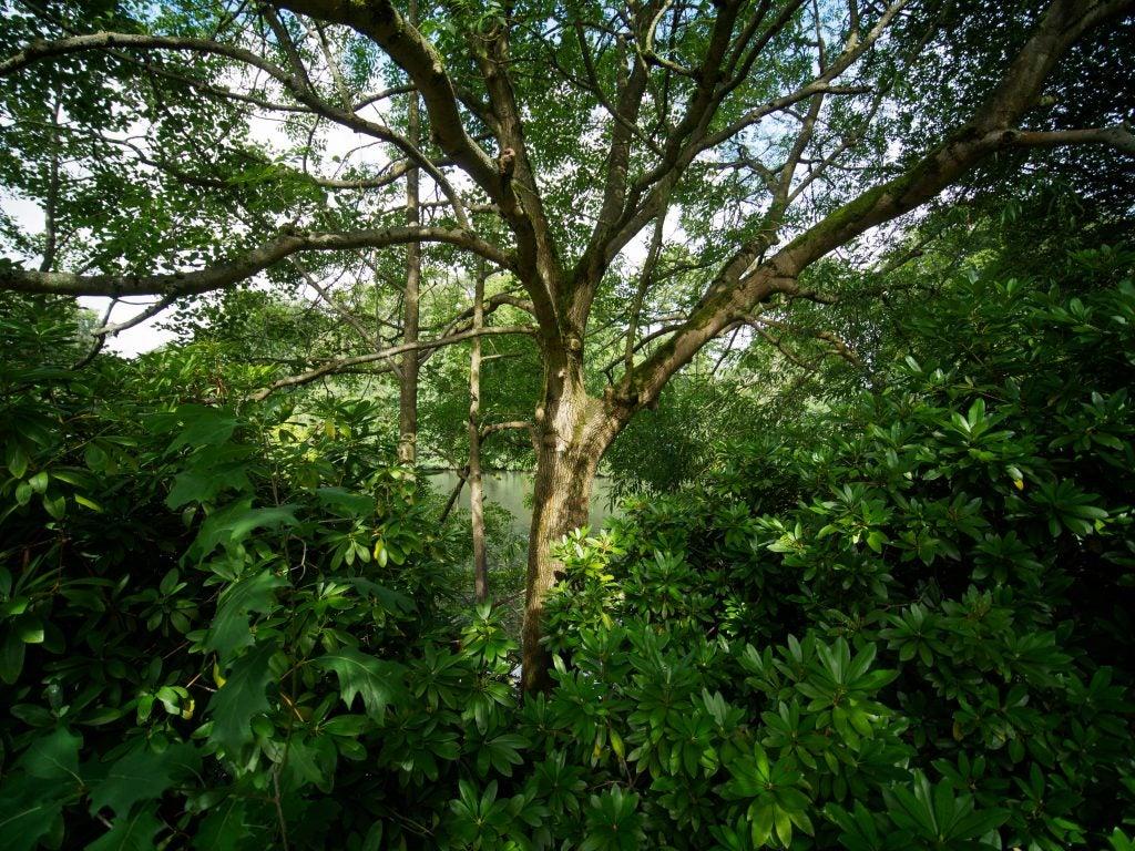 Lawoa 7.5mm f/2 MFT tree at f/2