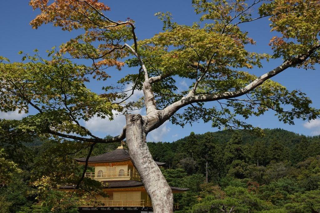Sony RX10 IV Kyoto Golden Pavilion temple sample