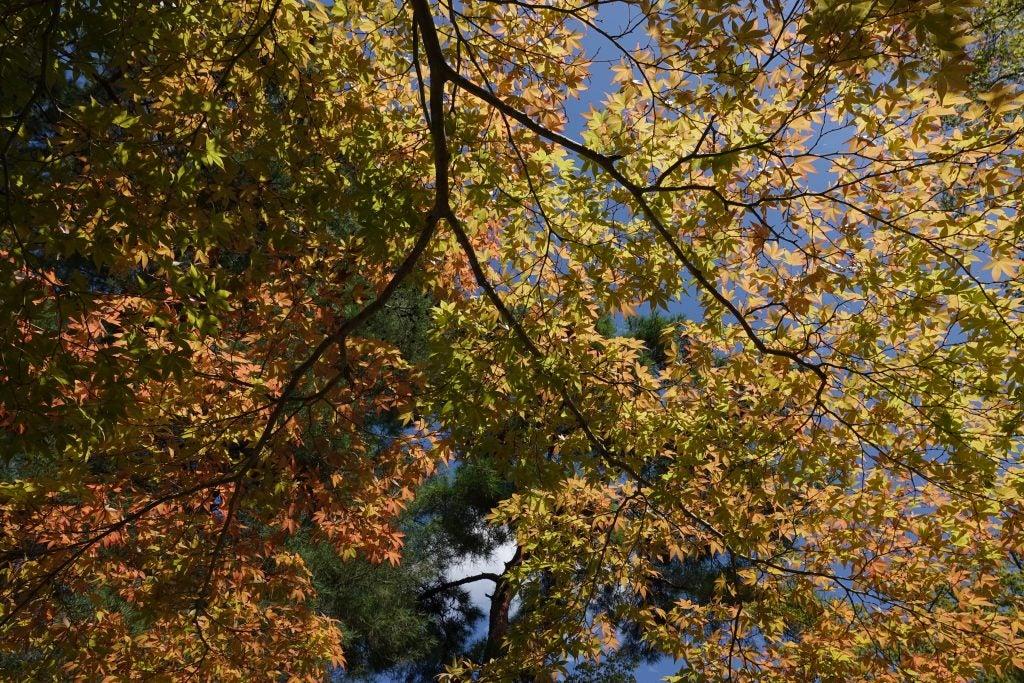 Sony RX10 IV autumn colour sample