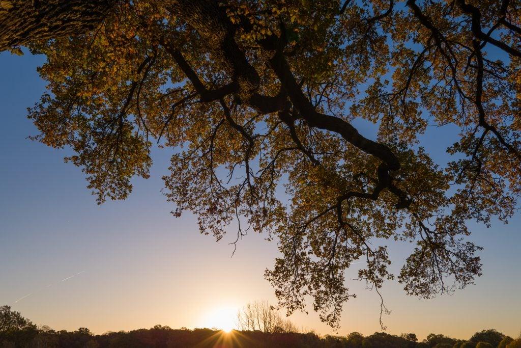 Leica CL sunrise image sample