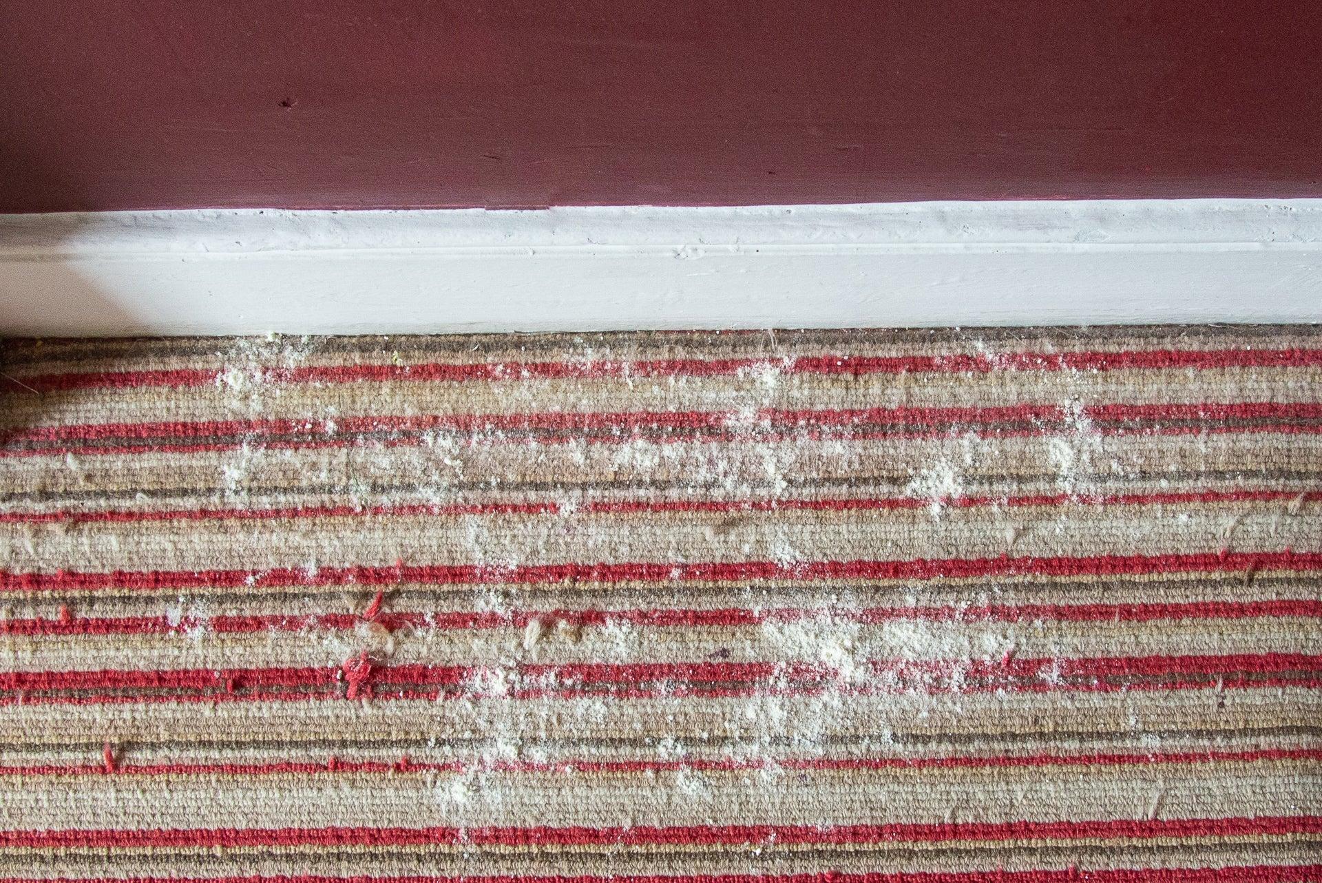 Vorwerk Kobold VB100 dirty carpet
