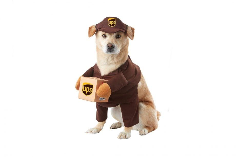 UPS doggo