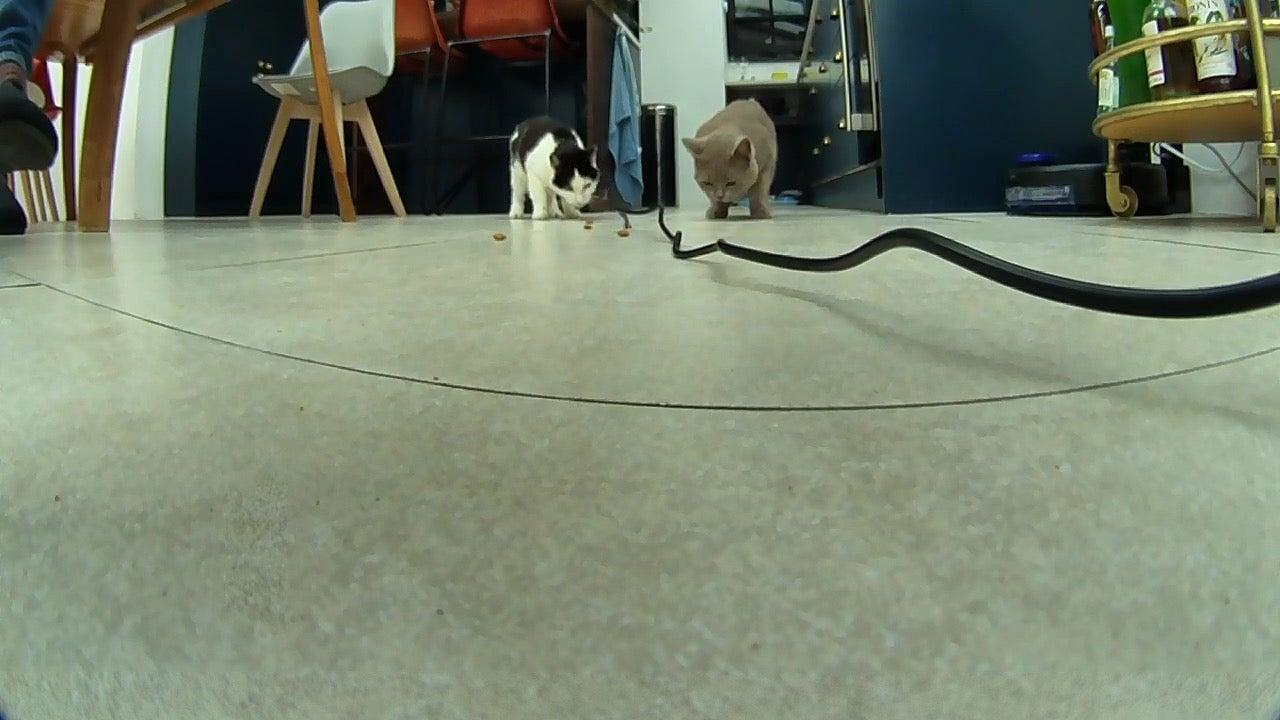Pet Cube Bites cats eating