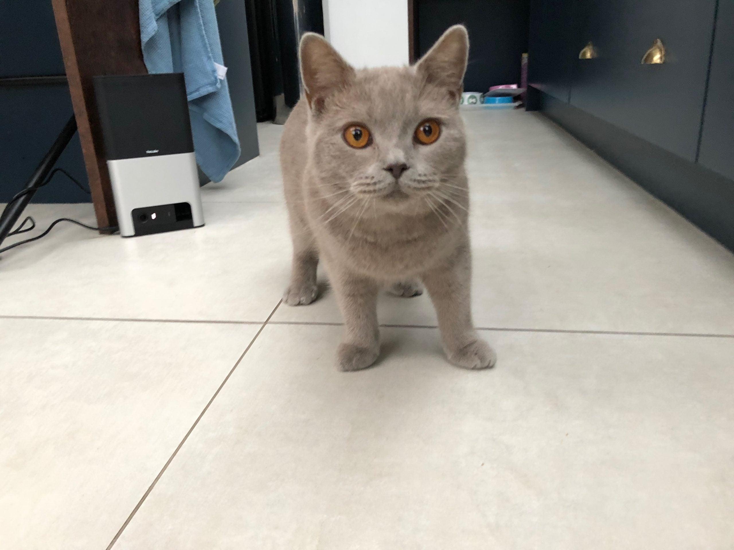 Petcube Bites 2 cat