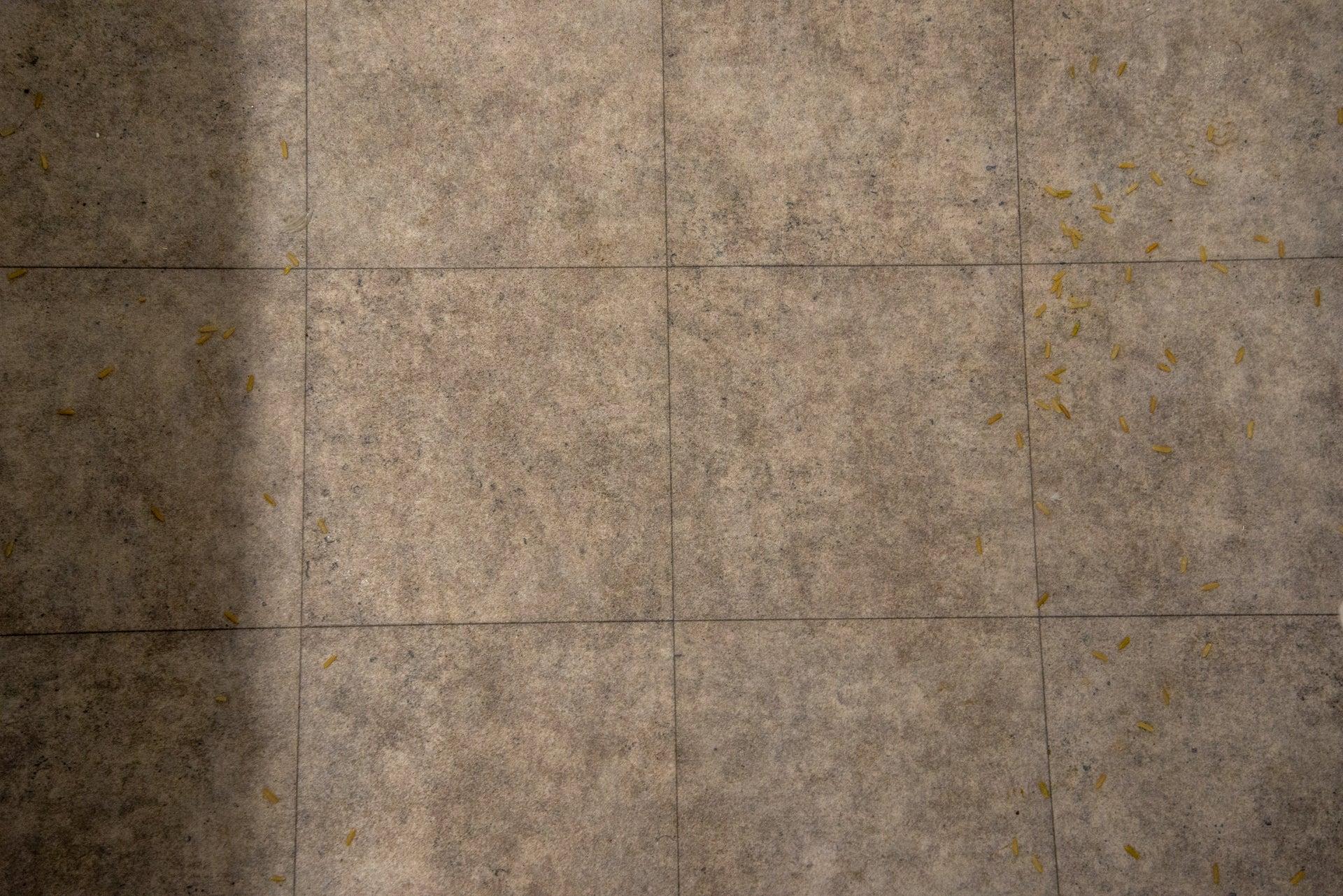 Hoover H-Free 300 clean hard floor