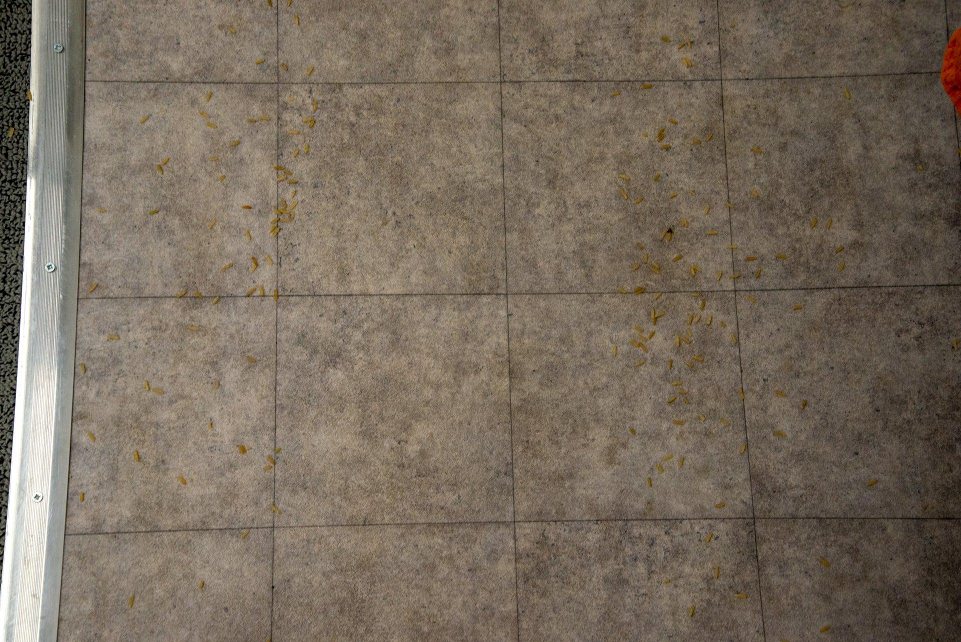 Ultenic U11 clean hard floor