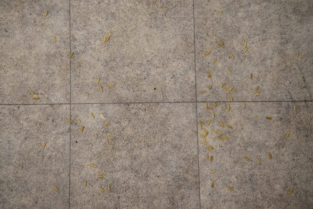 Shark UltraCyclone Pet Pro+ CH951 clean hard floor