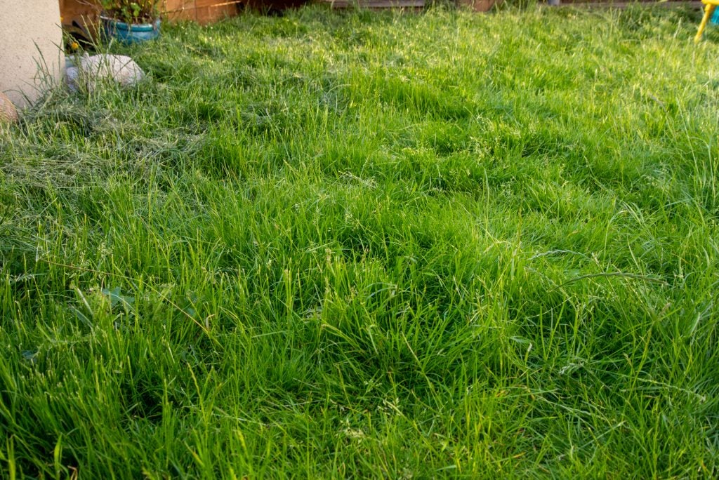 Stihl RMA 339 C long grass