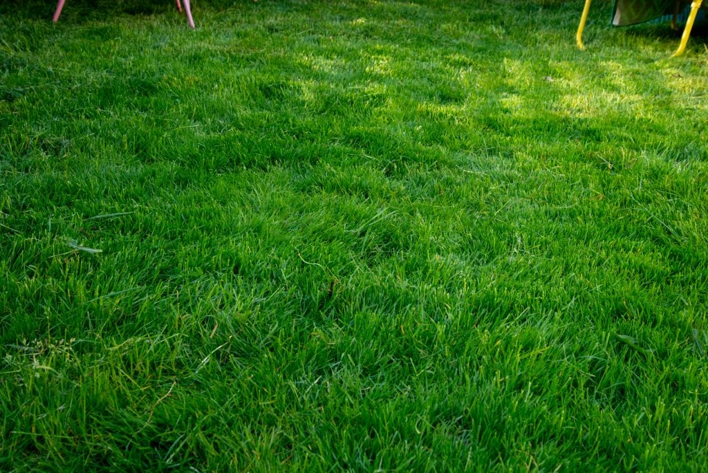Stihl RMA 339 C grass after cutting