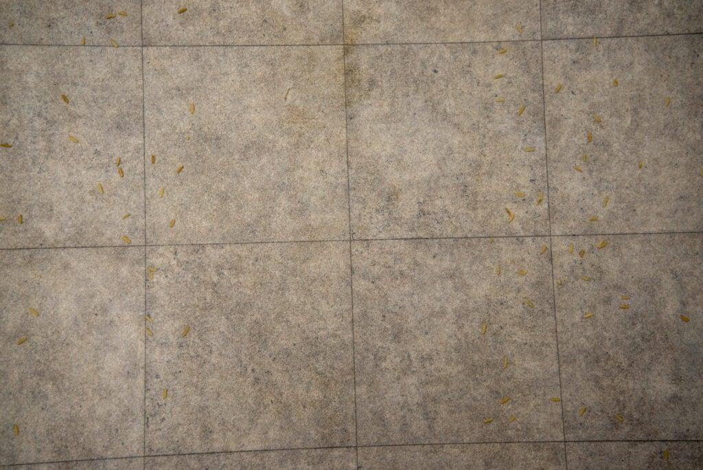 Eufy HomeVac H30 clean hard floor