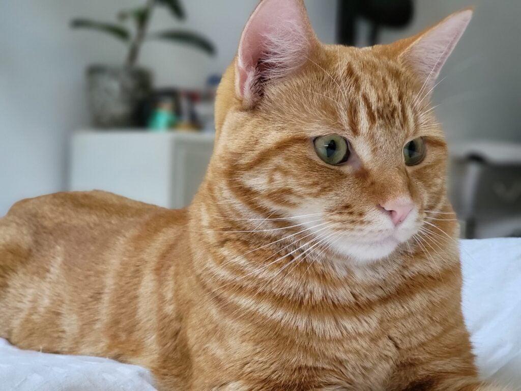 Galaxy Z Fold 3 test image cat
